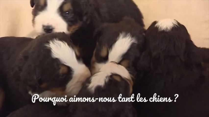 rencontres chiens de sommeilFDA datant